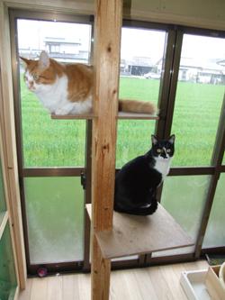 ペットハウス 健康住宅 犬 猫 大型 小型 佐賀市.jpg